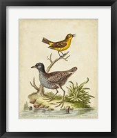 Antique Bird Menagerie II Framed Print