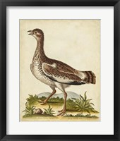 Antique Bird Menagerie X Framed Print