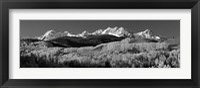 Framed Colorado, Rocky Mountains, aspens, autumn