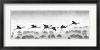 Framed Flamingos landing, Kenya
