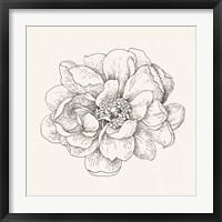 Pen and Ink Florals IV Framed Print