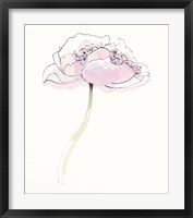 Single Pink Somniferums II on White Framed Print