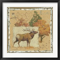 Framed Deer / Elk