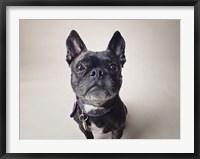 Framed Bailey