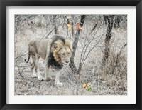 Framed Lion