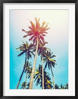 Framed Palms in the Sun