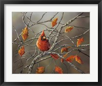 Framed Fall Cardinal
