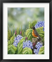 Framed Robin With Hydrangeas