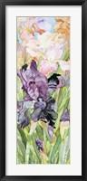 Framed Black Iris