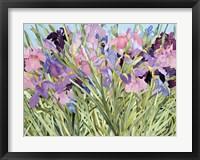 Framed Iris Garden X