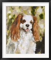 Framed Cavalier King Charles