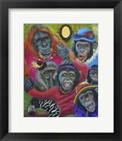 Framed Monkey Selfies