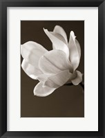 Framed Sepia Magnolia