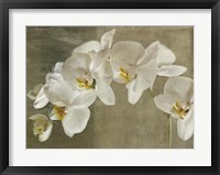 Framed Painted Orchid