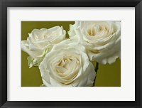 Framed Cream Roses