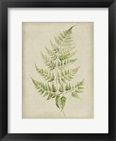 Framed Fern 2