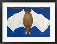 Framed Bat