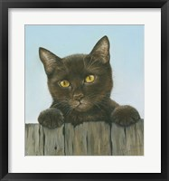 Framed Black Kitten