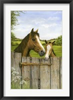 Framed Mother And Foal