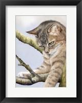 Framed Tabby In Tree