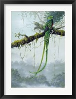 Framed Resplendent Quetzal