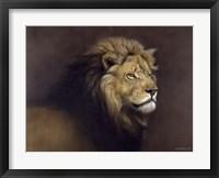 Framed Lion Male