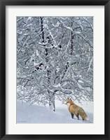 Framed Fox In Snow