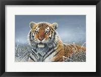 Framed Tiger In Snow