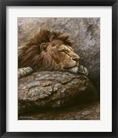 Framed Lion Male 2