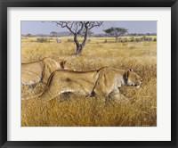 Framed Hunting Lions