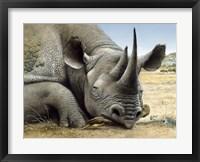 Framed Black Rhino