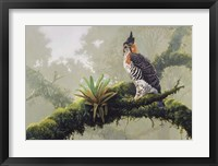 Framed Ornate Hawk - Eagle