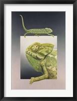 Framed Chameleon