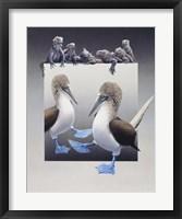Framed Bluefooted Boobies And Marine Iguanas