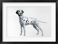 Framed Dalmatian