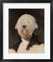 Framed George