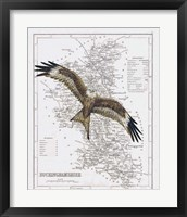 Framed Red Kite