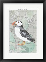 Framed Atlantic Puffin