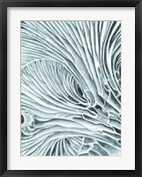 Framed Mushroom Gills II