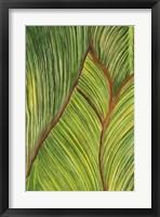 Framed Tropical Crop II
