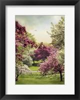 Framed Cherry Tree Grove