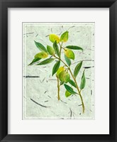 Framed Olives on Textured Paper I