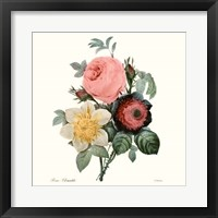 Framed Blushing Bouquet II