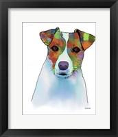 Framed Jack Russell Terrier 1