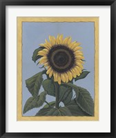 Framed Apple Sunflower