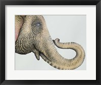 Framed Spotted Asian Elephant 2