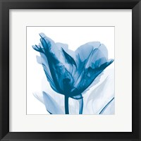Framed Lusty Blue Tulip