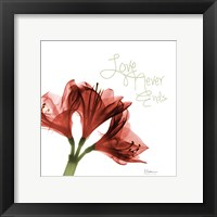 Framed Amaryllis Love