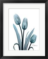 Framed Midnight Sky Tulip Trio