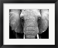 Framed Elephant Lore